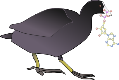 Coot-with-ATP-vector.png